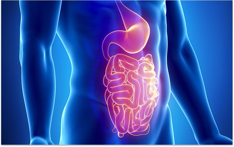 Gut Microbiota – an unappreciated organ